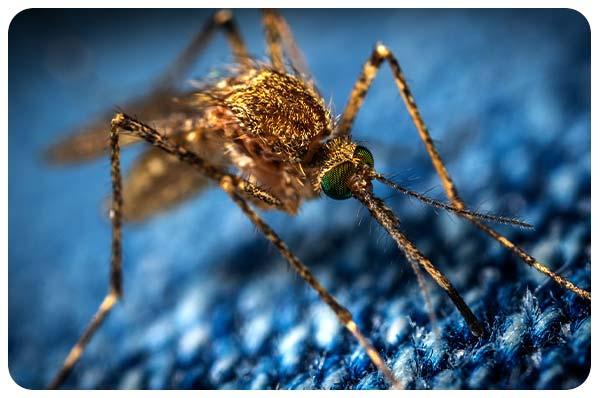 glosario medicina de viaje mosquito